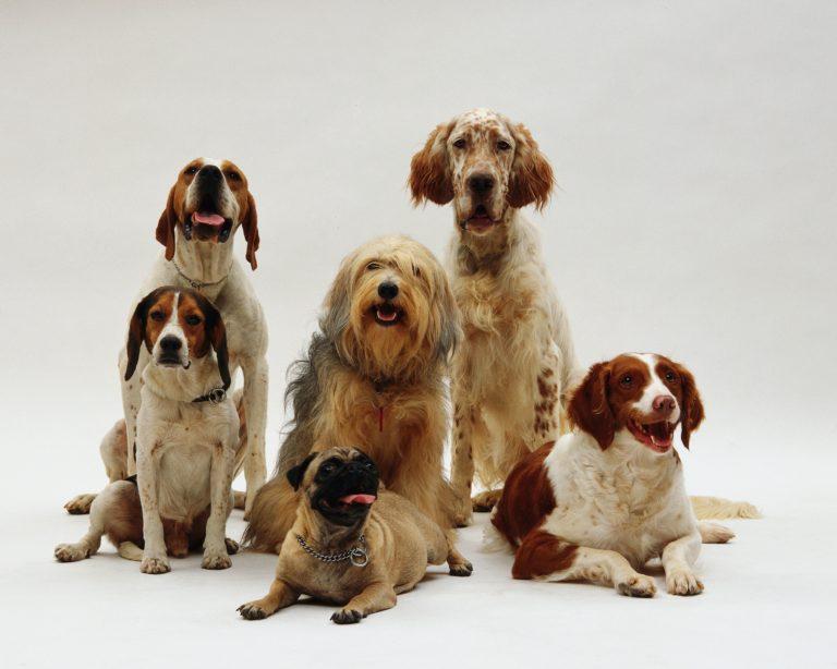 beautiful shot of different dog breeds posing Porteo